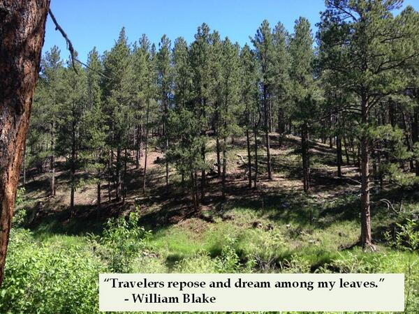 Travelers repose and dream among my leaves - William Blake
