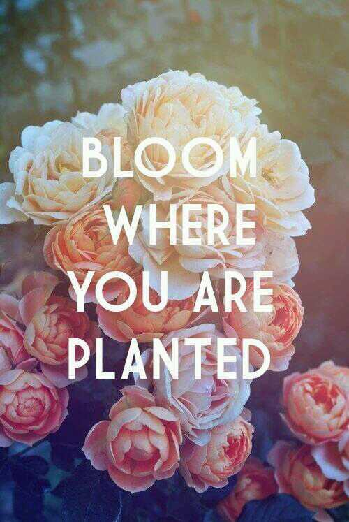 Plants quote Bloom where are you planted.