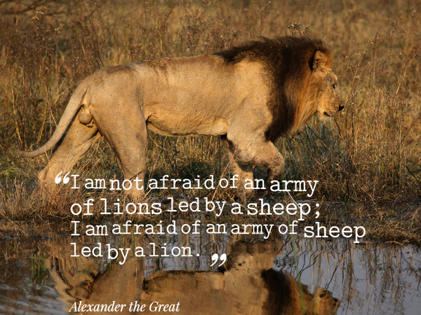 Military personnel quote I am not afraid of an army of lions led by a sheep; I am afraid of an army of sh