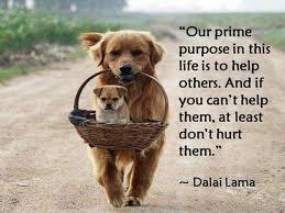 Purpose quote Our prime purpose in this life is to help others. And if you can't help them, at