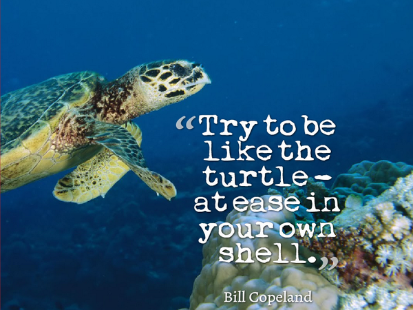 Try to be like the turtle - at ease in your own sh ...