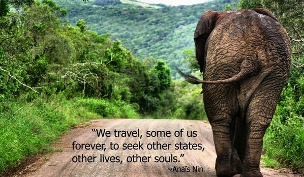 Live forever quote We travel, some of us forever, to seek other states, other lives, other souls.