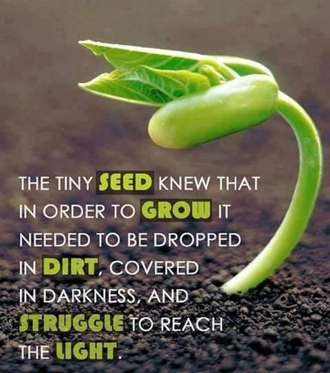 Drop quote The tiny seed knew that in order to grow it needed to be dropped in dirt, covere