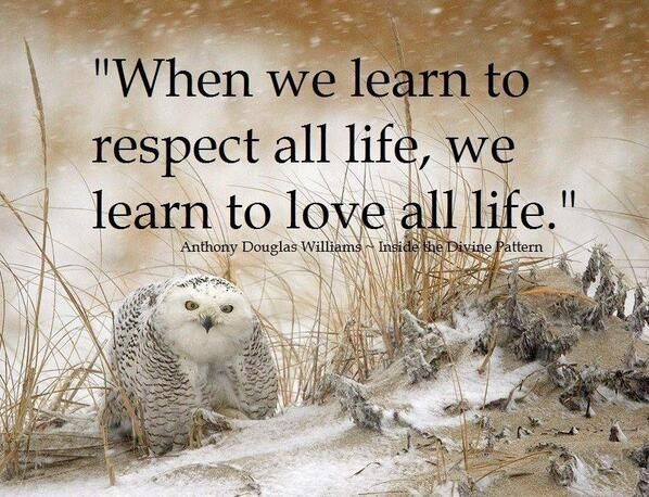 Learn to love yourself quote When we learn to respect all life, we learn to love all life.