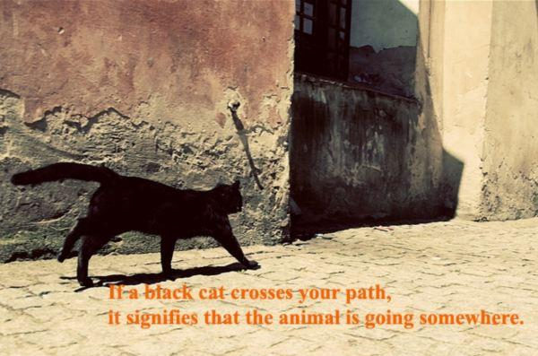 Blacks quote If a black cat crosses your path, it signifies that the animal is going somewher