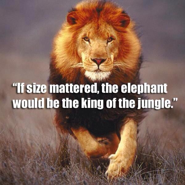 Medium sized quote If size mattered, the elephant would be the kind of the jungle.