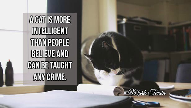 Crime fiction quote A cat is more intelligent than people believe, and can be taught any crime.