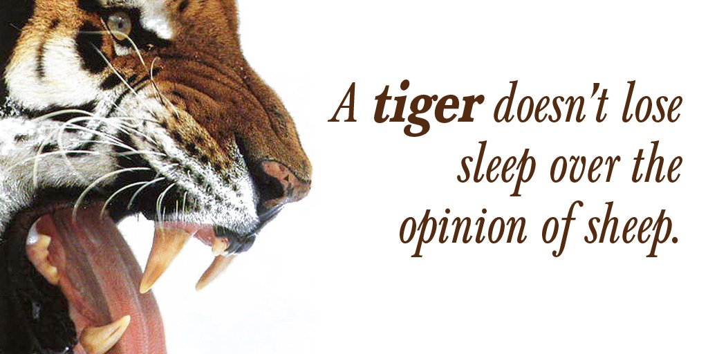 Losing quote A tiger doesn't lose sleep over the opinion of sheep.