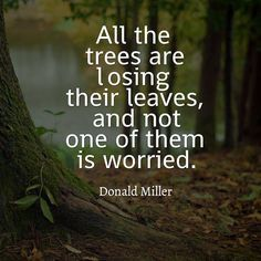 Tree quote All trees are losing their leaves, and not one of them is worried.