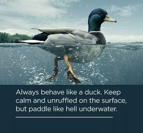 Always smile quote Always behave like a duck. Keep calm and unruffled on the surface, but paddle li