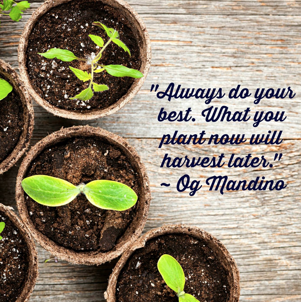 Harvest quote Always do your best. What you plant now will harvest later.