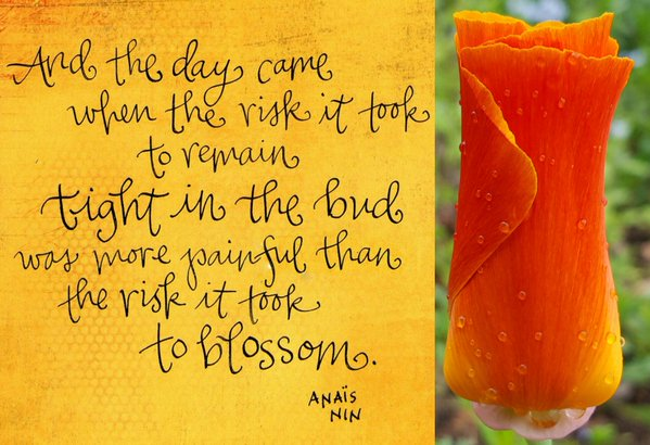 Picture quote by Anais Nin about inspirational