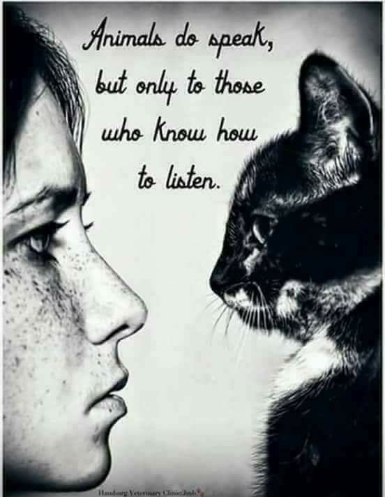 Animal rescue quote Animals do speak, but only to those who know how to listen.