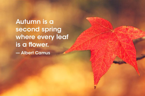 Season quote Autumn is a second spring where every leaf is a flower.
