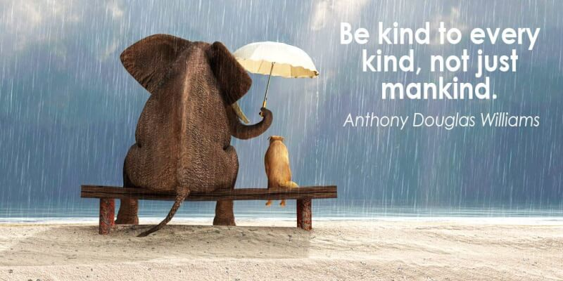 Anthony D. Williams quote Be kind to every kind, not just mankind.