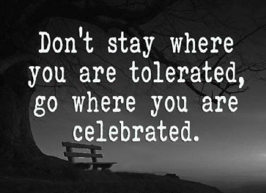 Celebrities quote Don't stay where you are tolerated, go where you are celebrated.