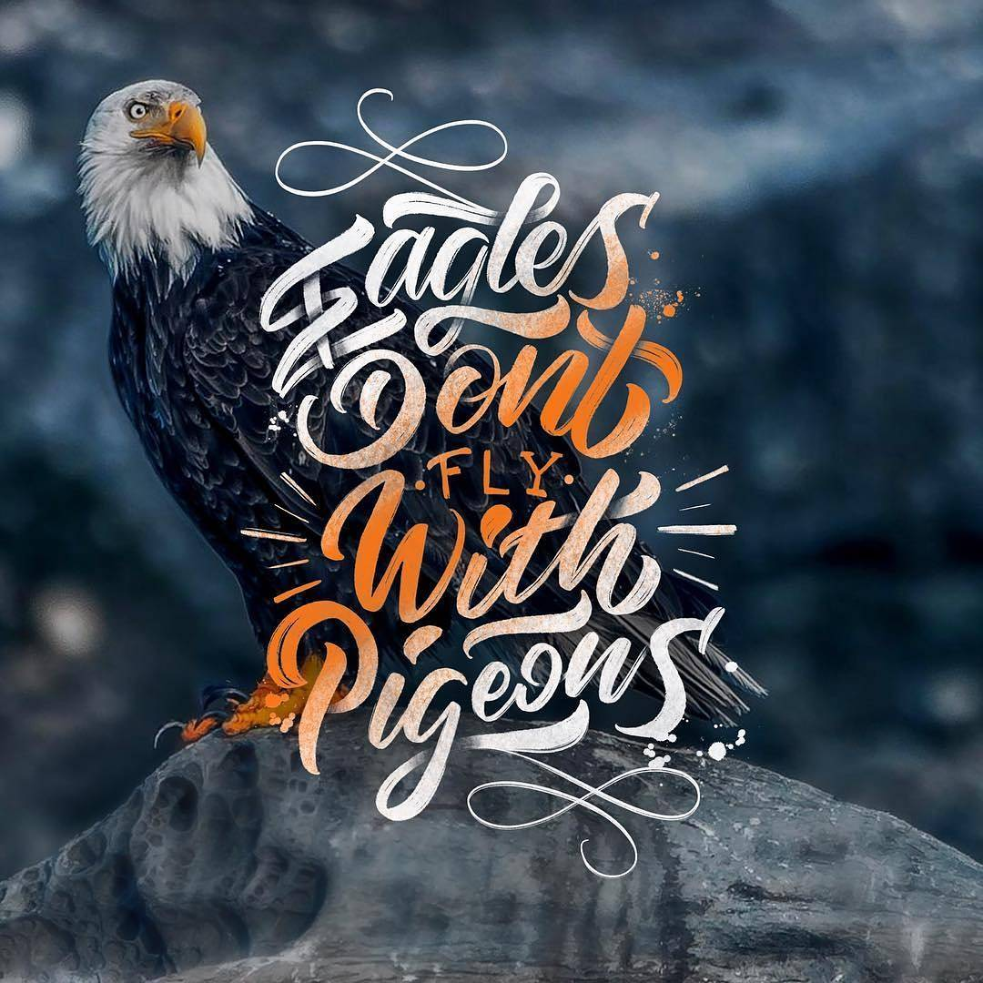 Eagles don't fly with pigeons. - Sayings