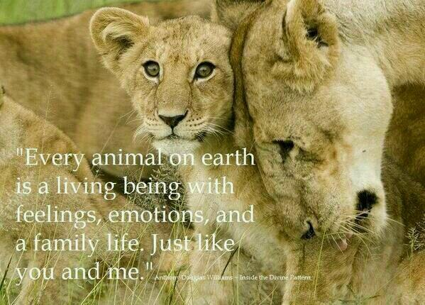 Earth quote Every animal on earth is a living being with feelings, emotions, and a family li