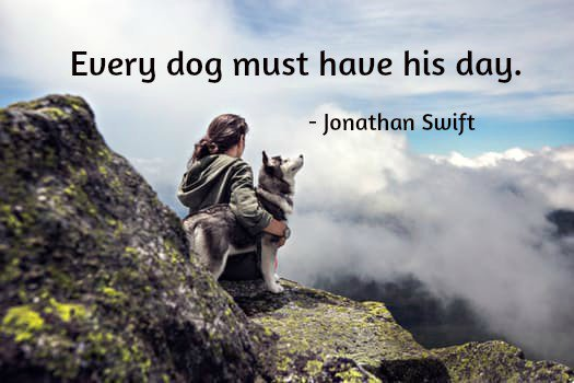 Fact quote Every dog must have his day.