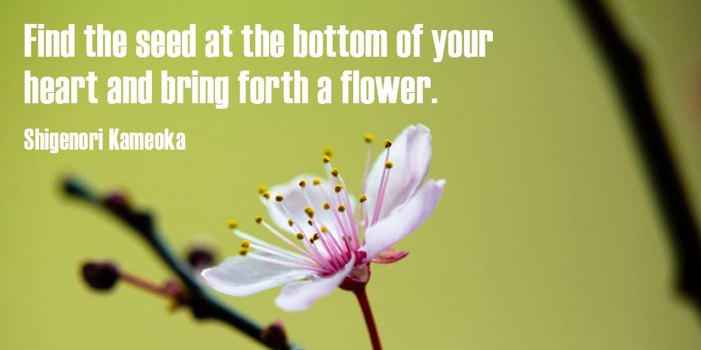 Bottom quote Find the seed at the bottom of your heart and bring forth a flower.