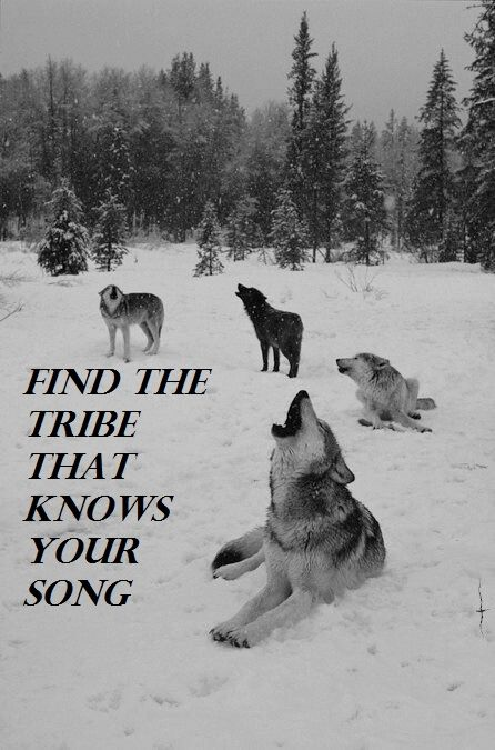 Song quote Find the tribe that knows your song.