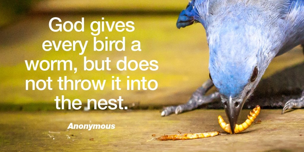 Kingdom of god quote God gives every bird a worm, but does not throw it into the nest.