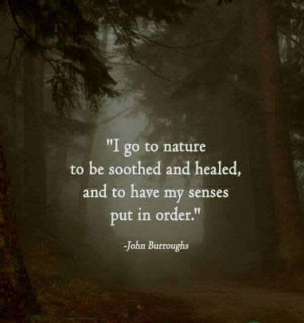 Healing quote I go to nature to be soothed and healed and to have my senses put in order.