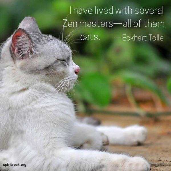 Zen quote I have lived with several masters - all of them cats.