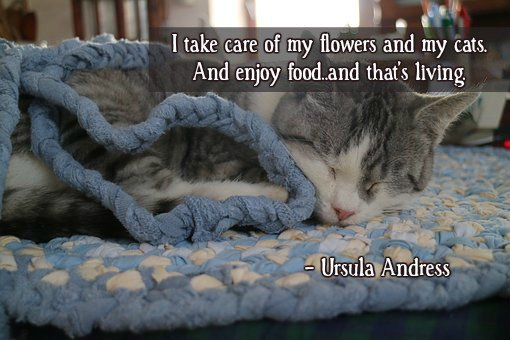 Cute quote I take care of my flowers and my cats. And enjoy food. And that's living.