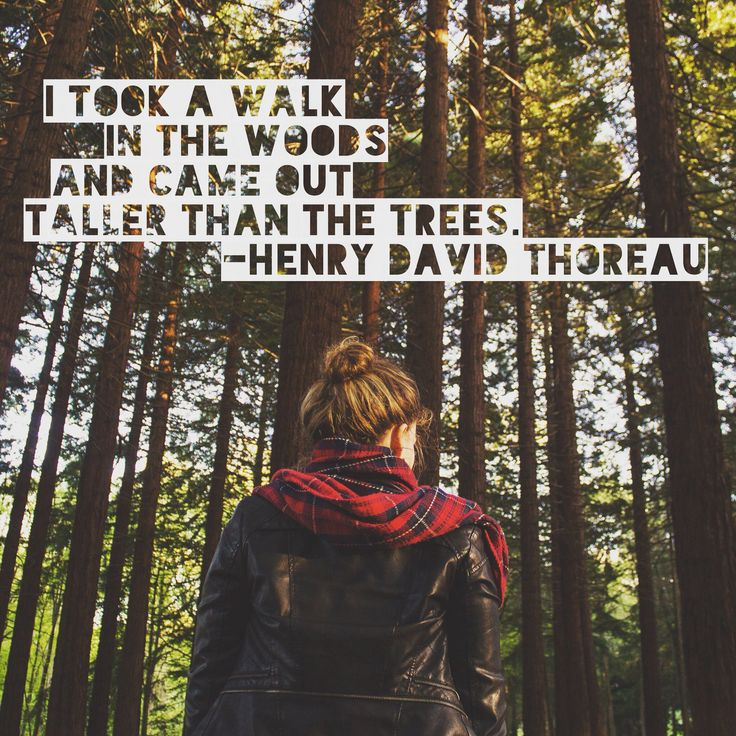 Talk quote I took a walk in the woods and came out taller than the trees.