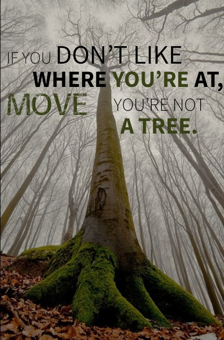 Moving out quote If you don't like where you're at, move you're not a tree.