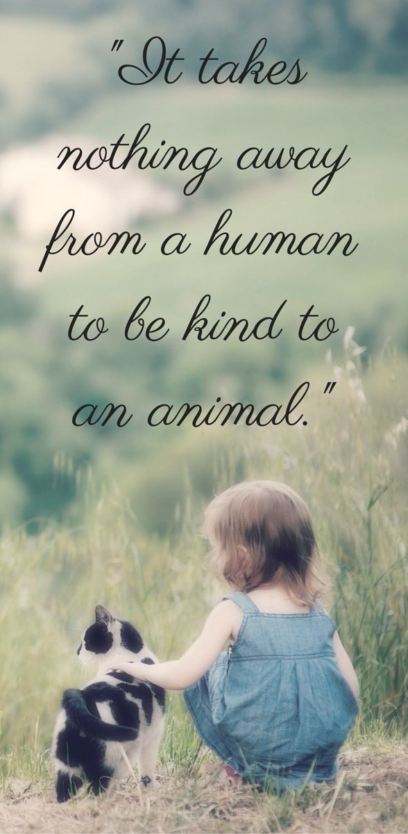Human trafficking quote It takes nothing away from a human to be kind to an animal.