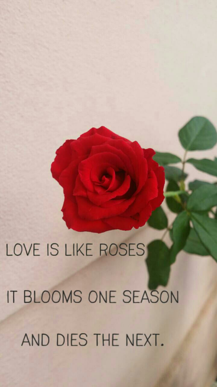 Season quote Love is like roses. It blooms one season and dies next.
