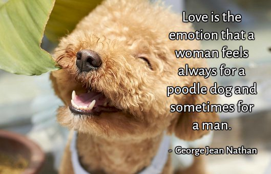 Animal rescue quote Love is the emotion that a woman feels always for a poodle dog and sometimes for