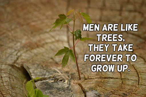 X men quote Men are like trees, they take forever to grow up.