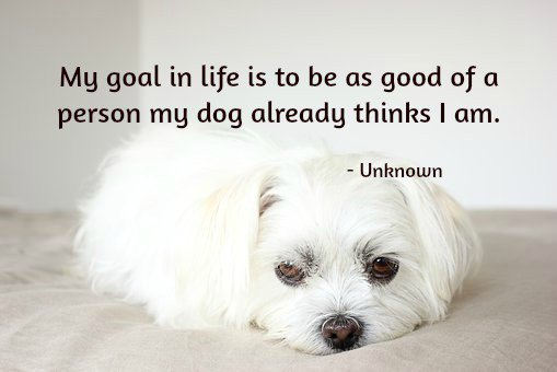 My goal in life is to be as good of a person my dog already thinks I am. - Source Unknown
