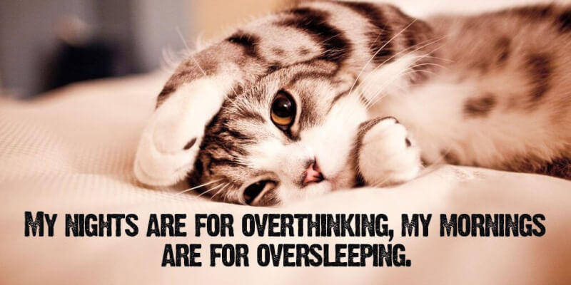 Fact quote My nights are for overthinking, my mornings are for oversleeping.
