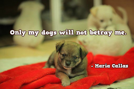 Maria Callas quote Only my dogs will not betray me.
