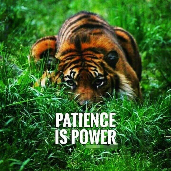 Having patience quote Patience is power.