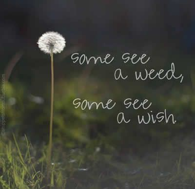 Wish quote Some see a weed, some see a wish.