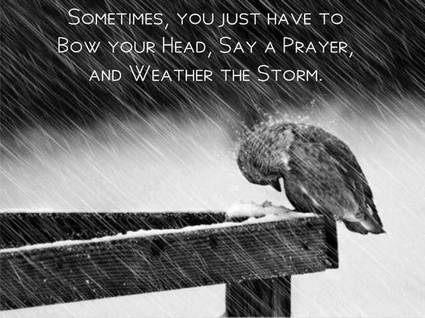 Weather quote Sometimes, you just have to bow your head, say a prayer, and weather the storm.
