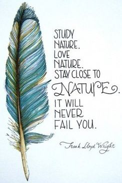 Close quote Study nature. Love nature. Stay close to nature. It will never fail you.