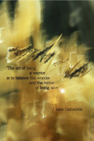 Terror quote The art of being a warrior is to balance the wonder and the terror of being aliv