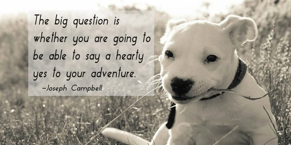 Picture quote by Joseph Campell about adventure