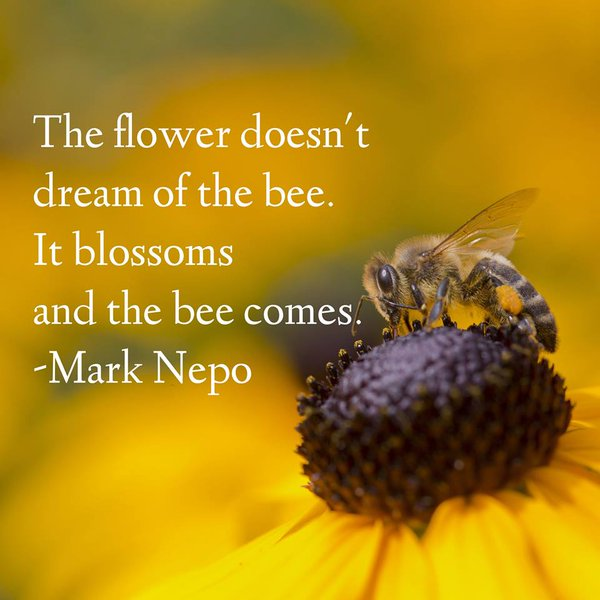 Honey bee quote The flower doesn't dream of the bee. It blossoms and the bee comes.