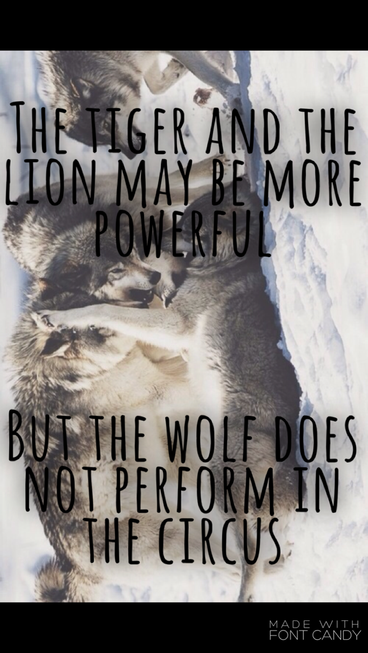Performance review quote The tiger and the lion may be more powerful, but the wolf does not perform in th