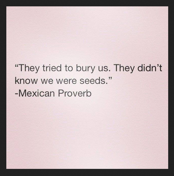 Mexican proverbs quote They tried to bury us. They didn't know we were seeds.