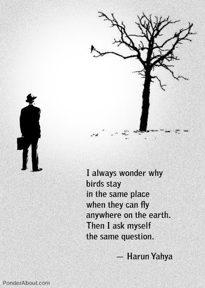 Earth quote I always wonder why birds stay in the same place when they can fly anywhere on t
