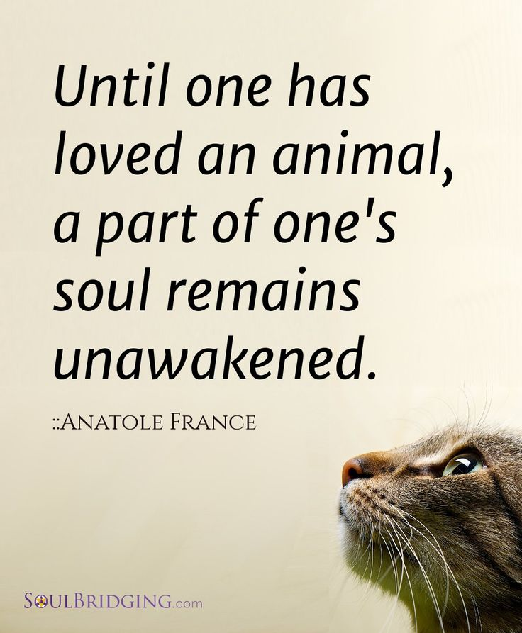 Anatole France quote Until one has loved an animal, a part of one's soul remains unawakened.