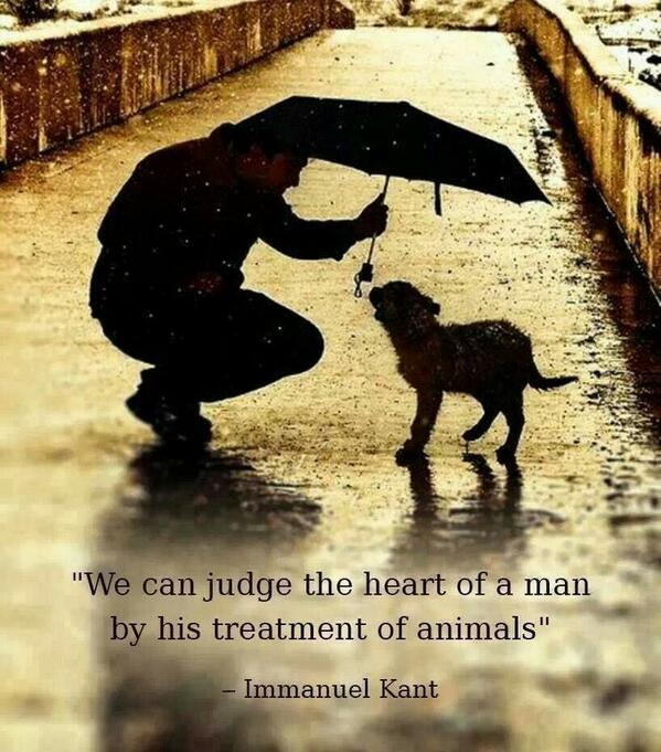 Judge quote We can judge the heart of a man by his treatment of animals.
